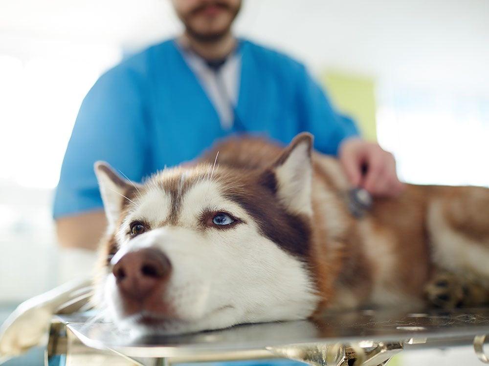 Votre vétérinaire ne vous respecte pas.