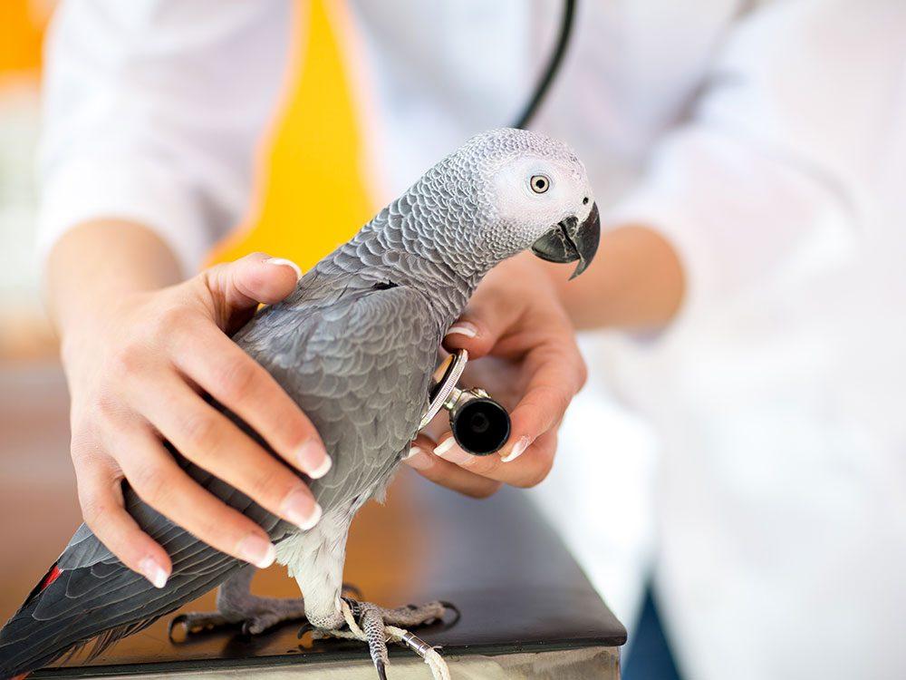 Votre vétérinaire écarte vos préoccupations.