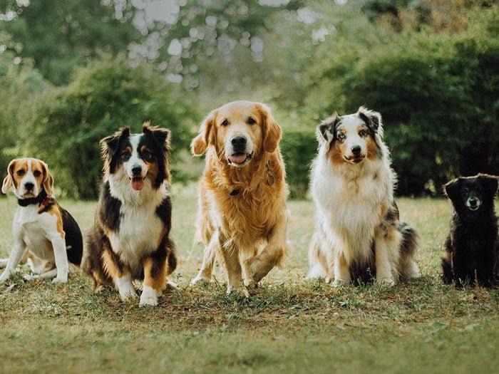 Qu'est-ce qui rend un chien moins allergène?