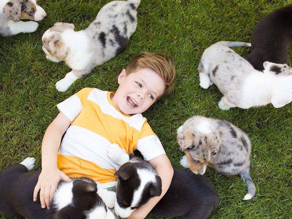 Rendez visite à votre nouveau chien hypoallergène avant de le ramener chez vous.