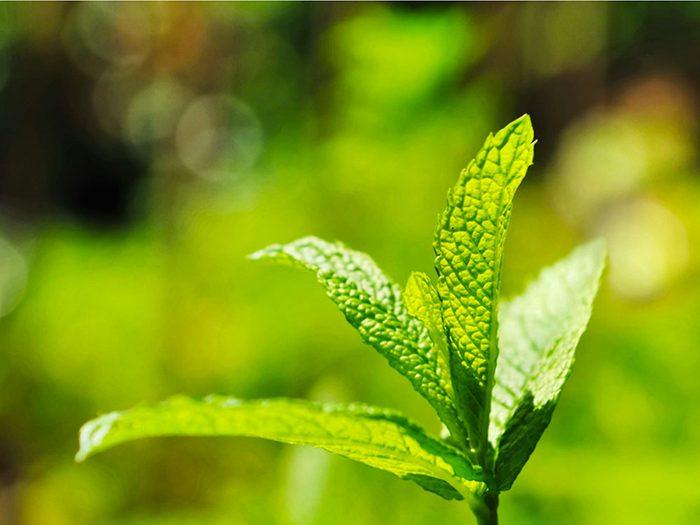 Apprendre le fonctionnement des huiles essentielles pour combattre l'acné.