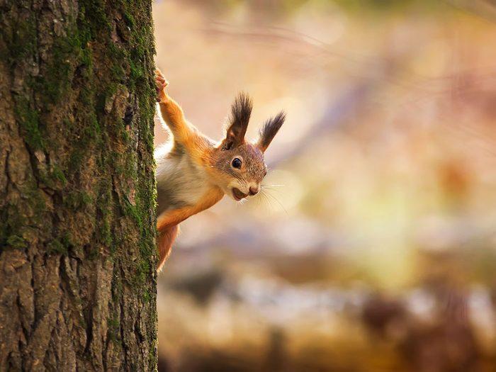 Photos hilarantes: un écureuil à l'affût.