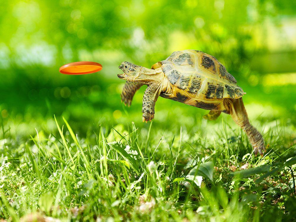 Photos hilarantes: frisbee pour tortue.