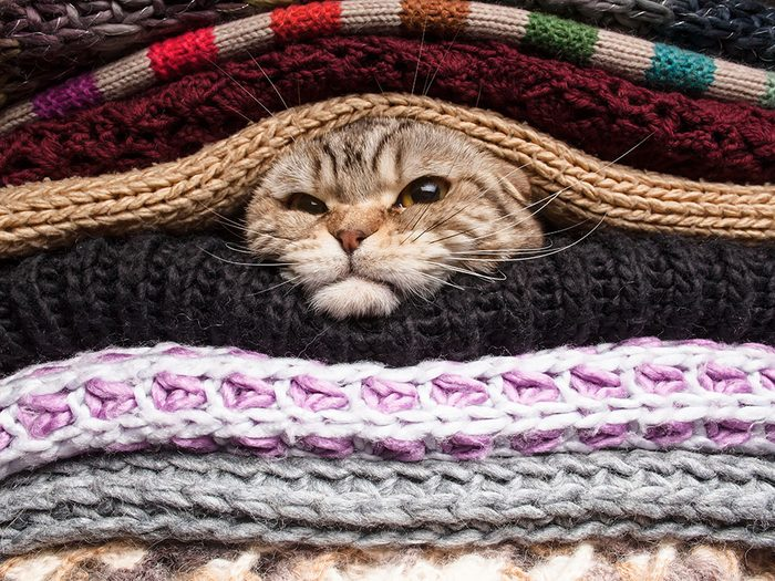 Photos hilarantes: chaton sous couvertures!