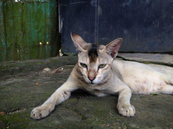 Photos hilarantes: chat du lendemain.