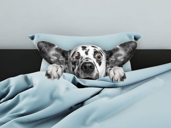 Photos hilarantes: dans le lit du maître.