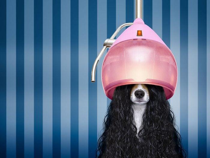 Photos hilarantes: un chien sous séchoir.