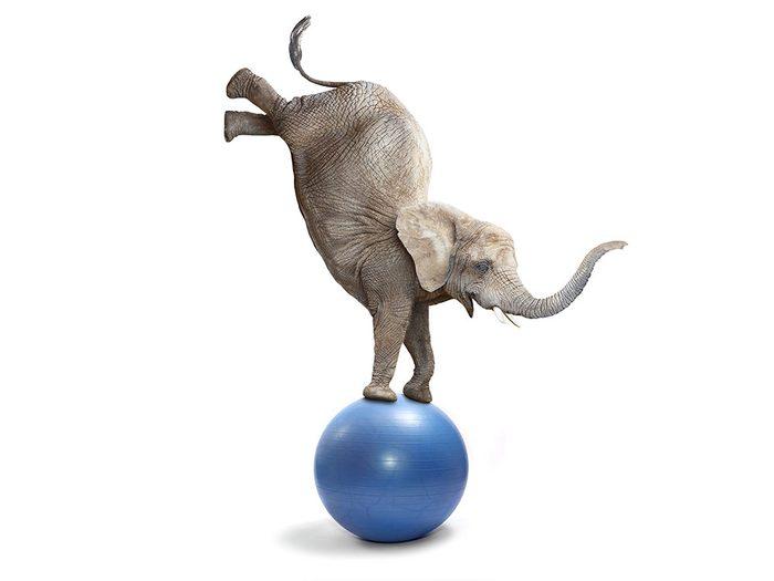 Photos hilarantes: acrobatie éléphantesque.