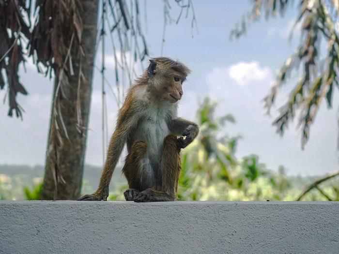 Photos hilarantes: un singe stressé.