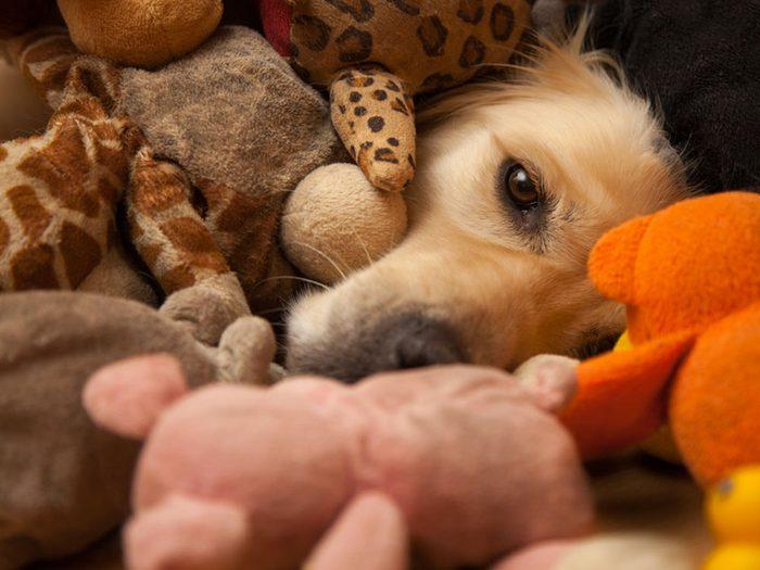 Les jouets de vos animaux familiers peuvent vous rendre malade.