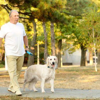 Attention aux risques de fractures quand vous promenez le chien