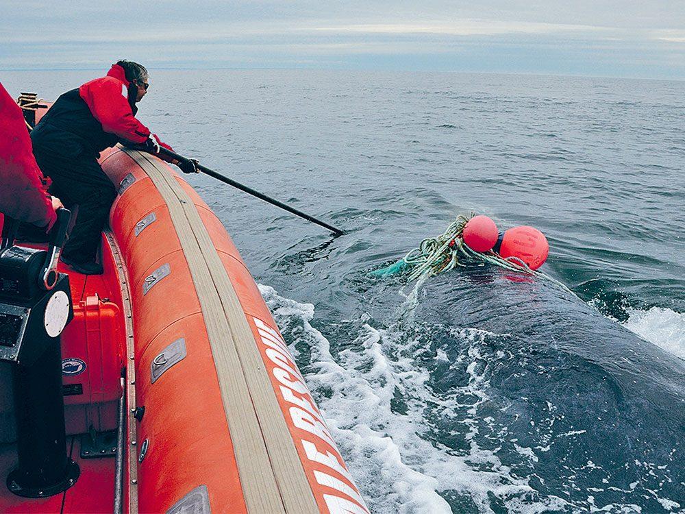 Joe Howlett lors d'un sauvetage de baleine en 2016.
