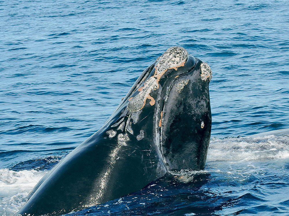 Il faut sauver la baleine 4123.
