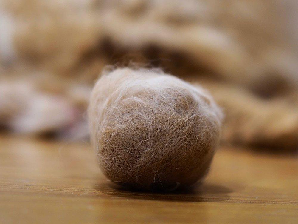 Fait sur les chats: les boules de poils régurgitées par le chat ne sont pas inquiétantes tant qu'elles ne sont pas excessives.