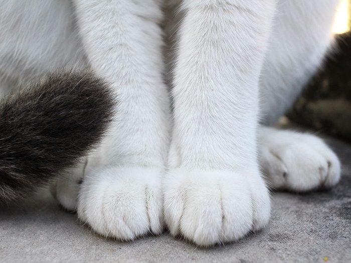 Fait sur les chats: ils ont des pattes ultra-sensibles.