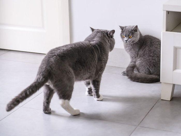 Fait sur les chats: ils sont pratiquement partout dans le monde.