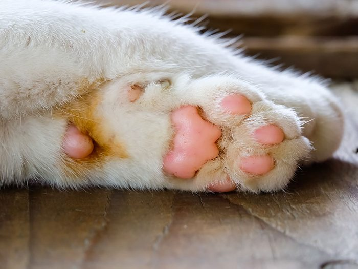 Fait sur les chats: ils ont des griffes et pattes odorantes.