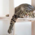 21 faits fascinants sur les chats
