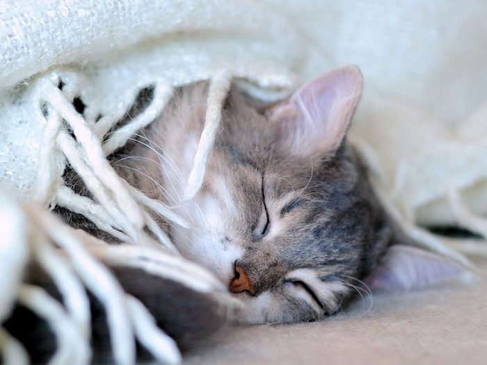 Fait sur les chats: ils se sont domestiqués seuls.