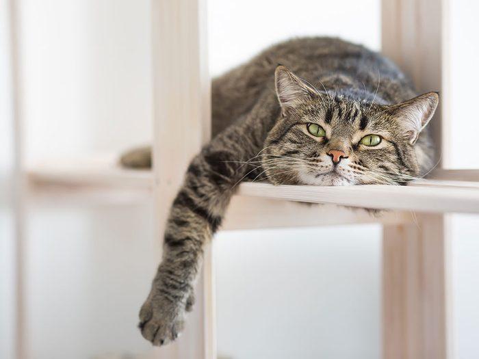 Fait sur les chats: ils imitent leur proie.