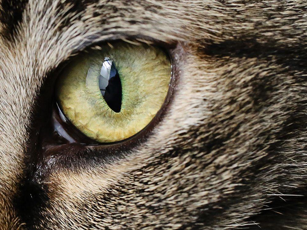 Fait sur les chats: ils ont une vision hors pair.