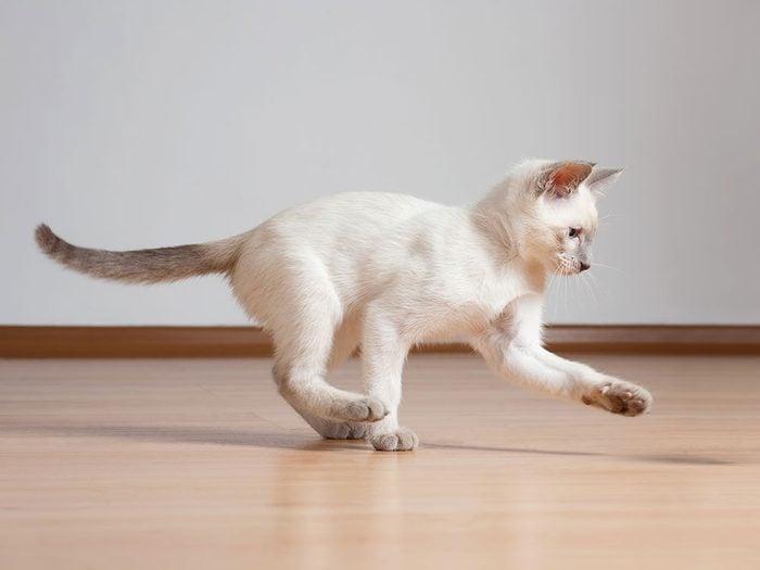 Fait sur les chats: 100 cris uniques.