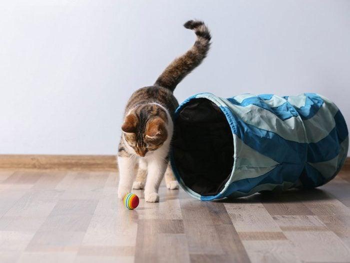 Fait sur les chats: se sont des prédateurs crépusculaires et non nocturnes.