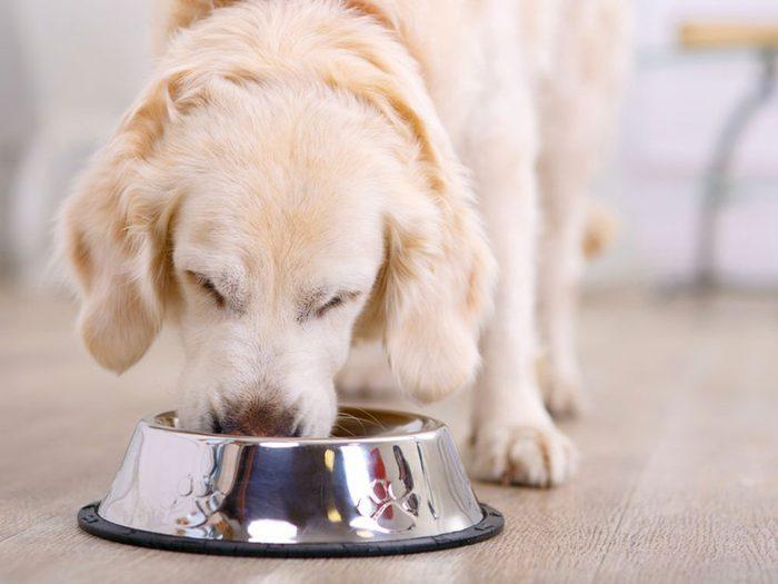 L'avocat fait partie des aliments que votre chien ne peut pas manger.