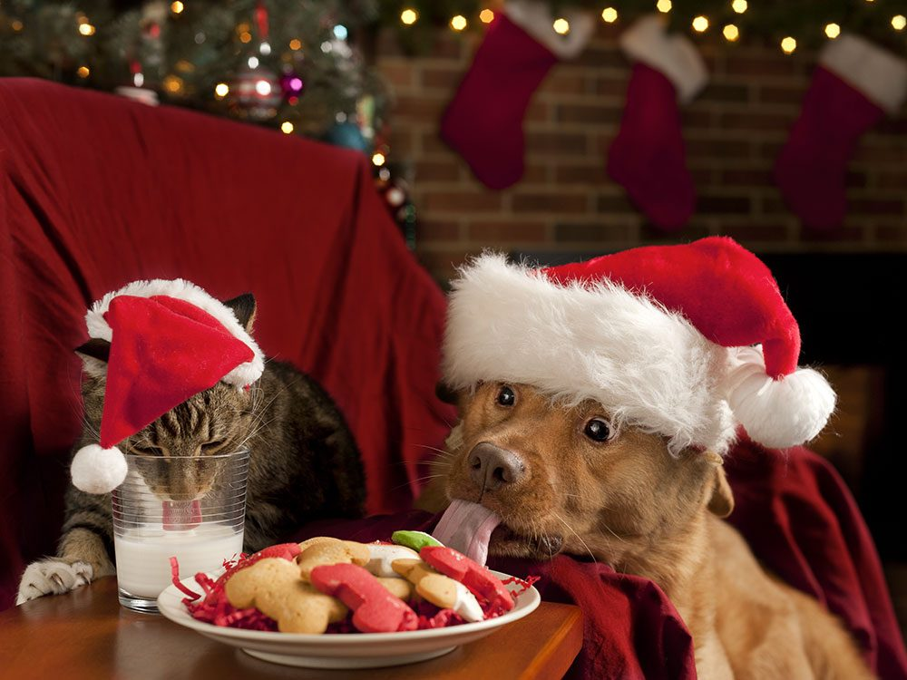 Attention aux imprévus des fêtes avec vos animaux de compagnie.