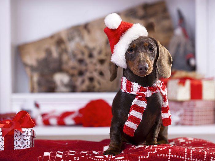 Pour Noël, n'offrez pas un animal de compagnie.