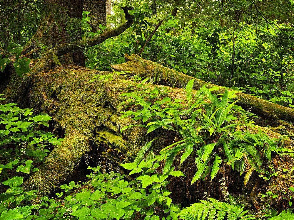 Perdue dans la forêt, Jean renonce à trouver son chemin elle-même et trouve un abri.