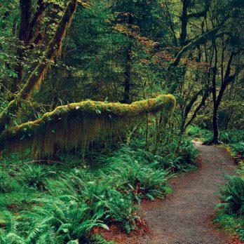 Perdue dans la forêt du Pacifique