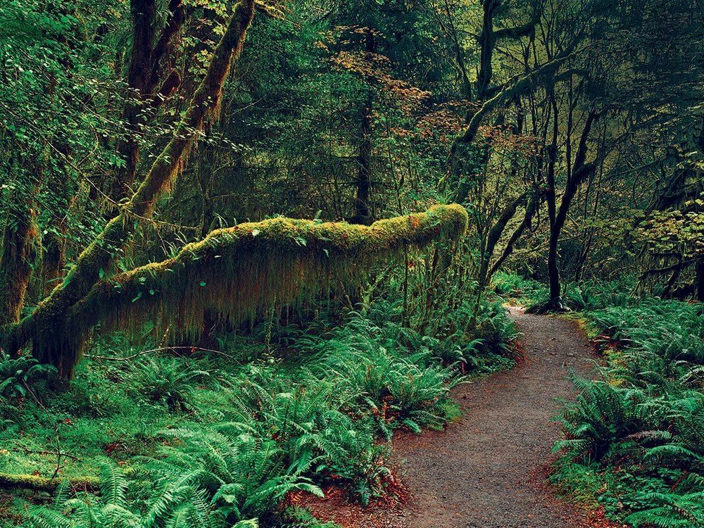 Perdue dans la forêt, ses chances d'être secourue s'amenuisent.