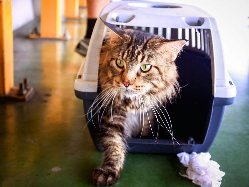 Amenez votre chat chez le vétérinaire dans une cage de transport en plastique à couvercle amovible.
