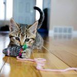 4 trucs simples pour dresser son chat
