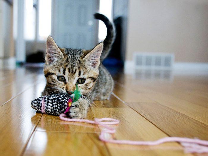 Le vétérinaire conseille d'acheter un jouet laser.