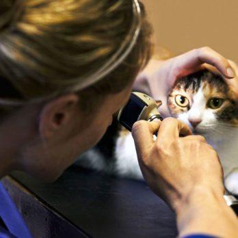 50 secrets bien gardés de votre vétérinaire