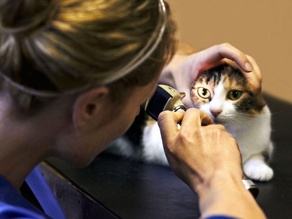 Il faut parfois payer pour des tests diagnostiques pour savoir de quoi souffre votre animal.