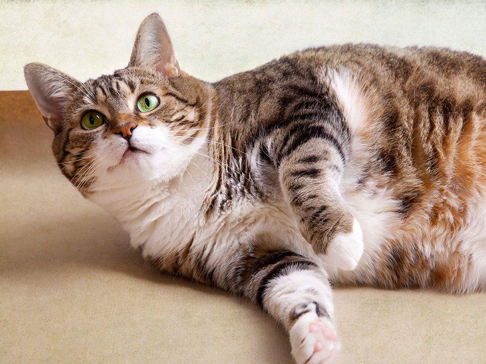D'après les vétérinaires, si votre animal est gros parce que vous l'êtes aussi.