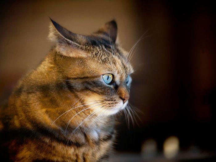 Certains vétérinaires ont des contrats pour euthanasier les animaux des refuges.