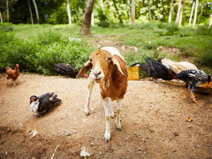 Le vétérinaire récupère les animaux abandonnés.