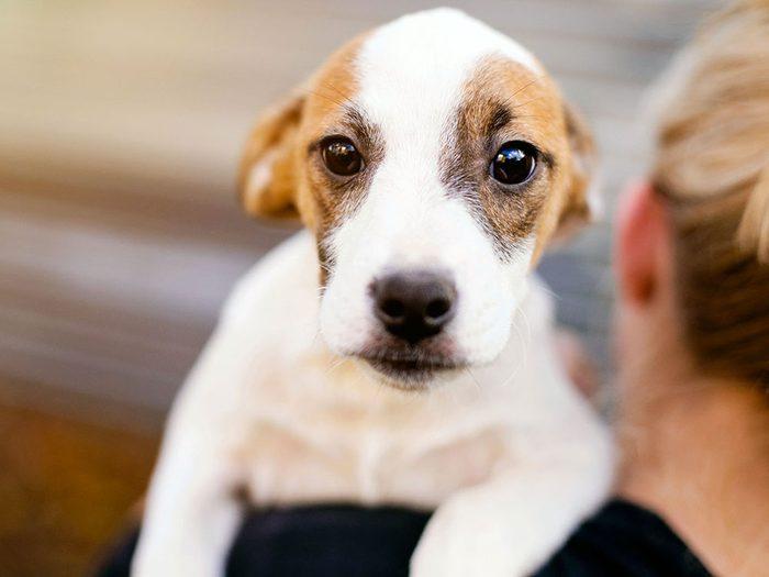 Si votre animal est vraiment malade, mieux vaut consulter le vétérinaire le matin.