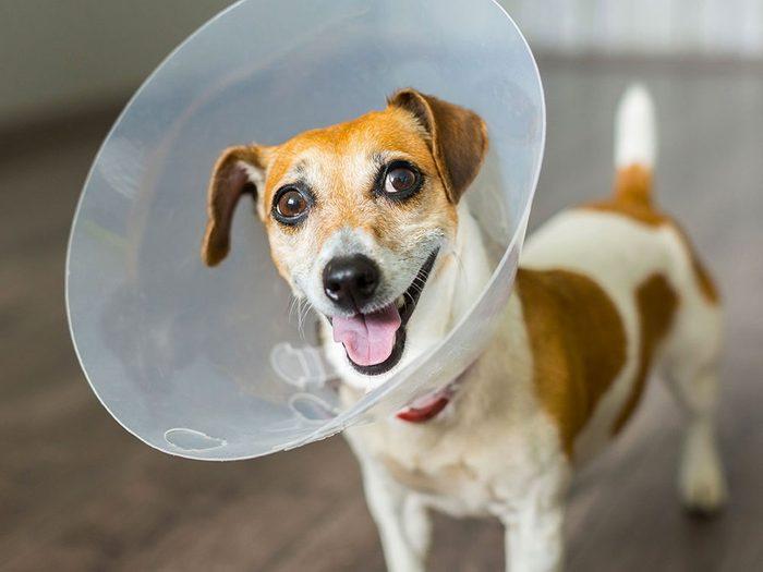 Le vétérinaire conseille d'investir dans une assurance pour animaux.