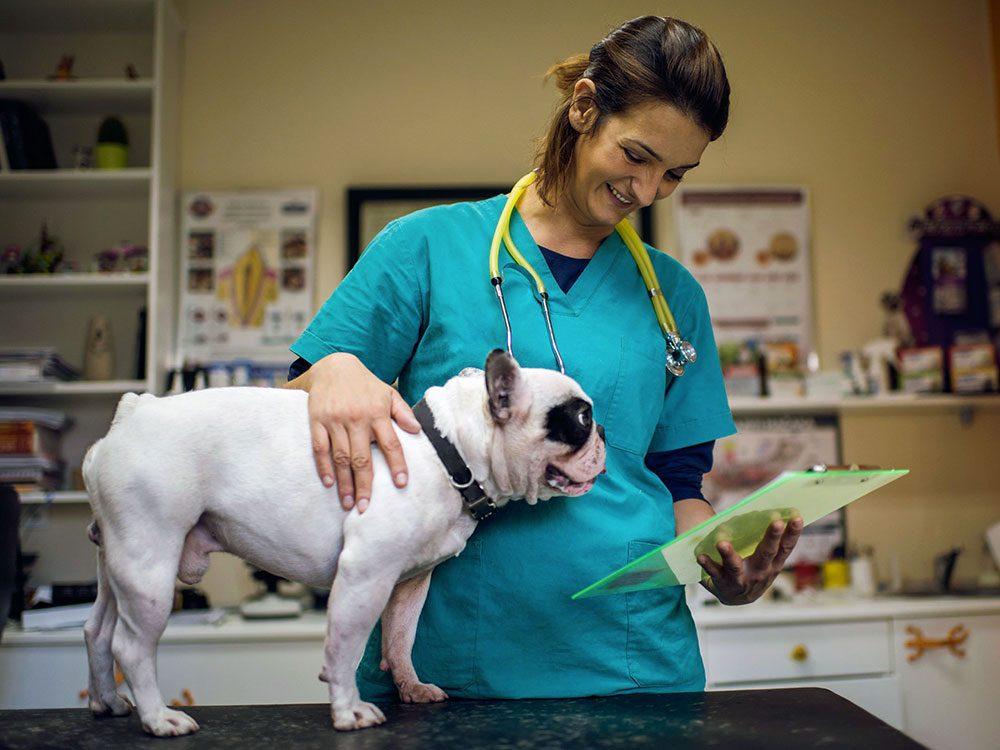 Si vous venez rendre visite à votre animal, n'oubliez pas que vous êtes chez le vétérinaire et qu'il travaille.