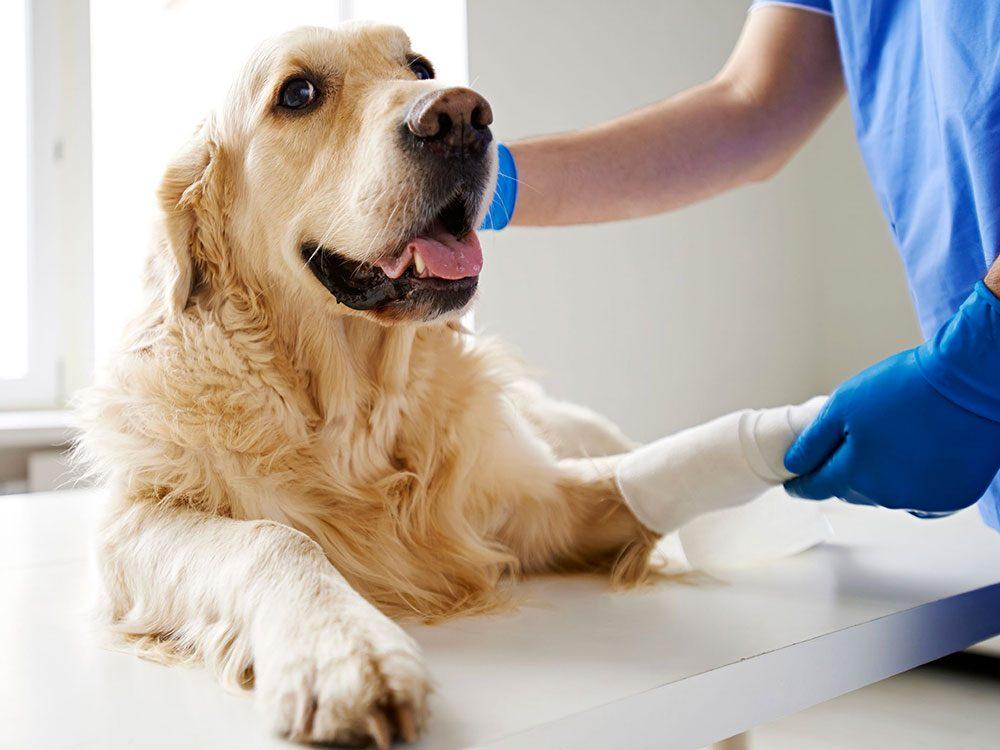 Chaque fois qu'un patient est guéri, le vétérinaire sait que son travail en vaut la peine.