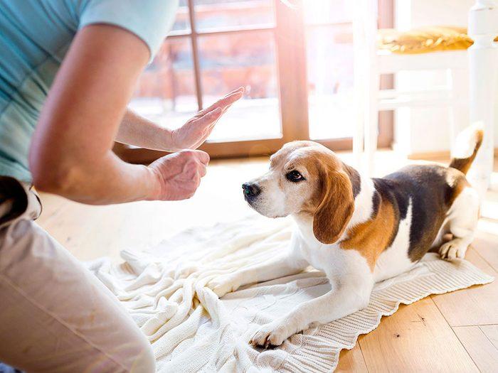 Le vétérinaire vous met en garde: utiliser des méthodes d'entraînement agressives peut entraîner de graves problèmes de comportement.