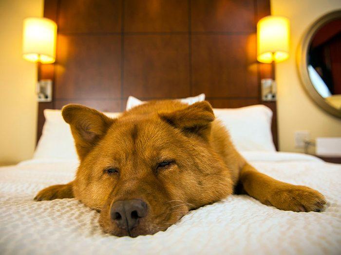 Nous sommes un hôpital vétérinaire, pas un hôtel pour chiens.