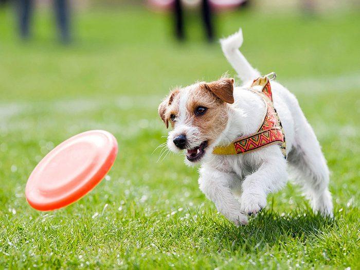 Le vétérinaire n'amènerait pas son chien dans un parc à chiens.