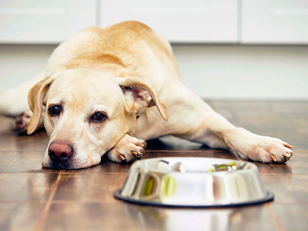 Le vétérinaire vous met en garde: cuisiner pour votre animal est plus difficile que vous ne le croyez.