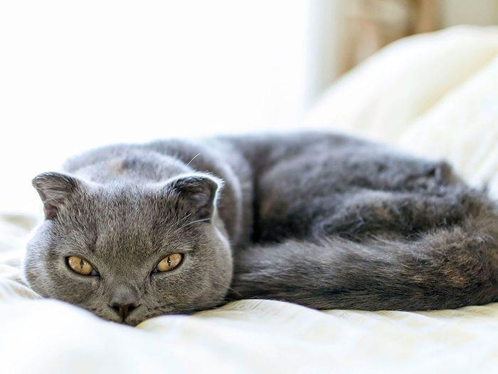 D'après le vétérinaire, les chats qui vivent à l'intérieur n'ont pas vraiment besoin d'être vaccinés.